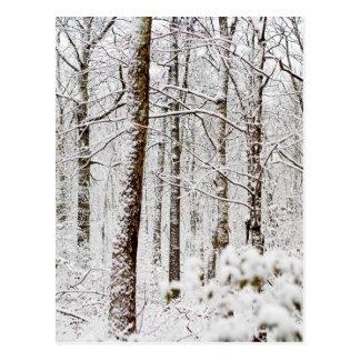 Snowy Pocono Woodlands Postcard
