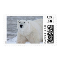 Snowy Polar Bear North Pole Stamp
