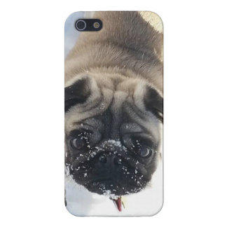 Snowy Pug iPhone 5/5s glossy case