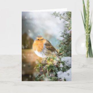 Snowy Robin Christmas Card
