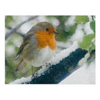 Snowy Robin Postcard