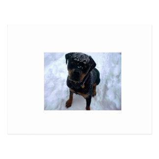 Snowy Sammy Postcard