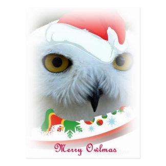 snowy Santa owl eyes Postcards