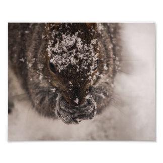 Snowy Squirrel Photo Print