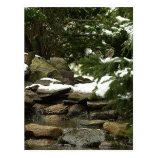 Snowy Stream Postcard