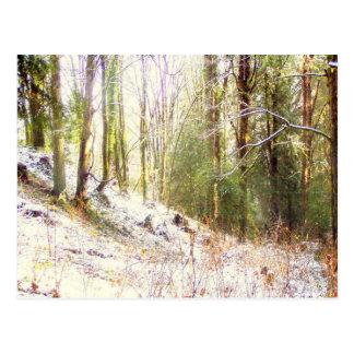 Snowy Sunlit Forest Glade #2 Postcards