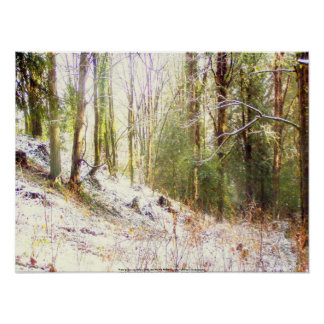 Snowy Sunlit Forest Glade 2 Poster