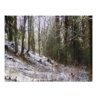 Snowy Sunlit Forest Glade Poster
