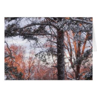 Snowy Sunrise Winter Snow Pine Tree Photo Greeting Card