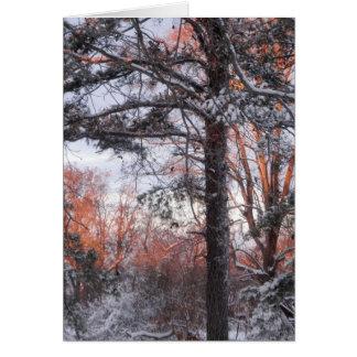 Snowy Sunrise Winter Snow Pine Tree Photo Greeting Cards