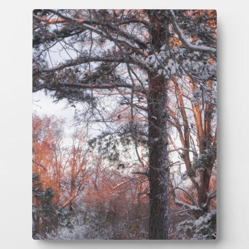 Snowy Sunrise Winter Snow Pine Tree Photo Display Plaque