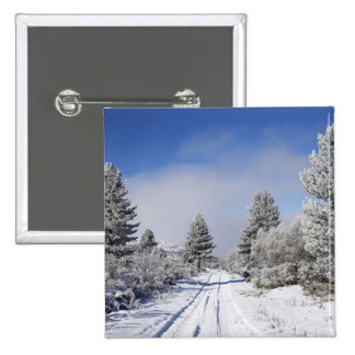 Snowy Track and Pine Trees, Cambrians, near St Button