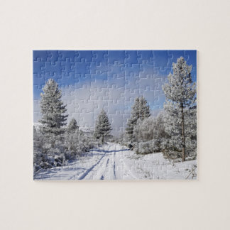Snowy Track and Pine Trees, Cambrians, near St Puzzles