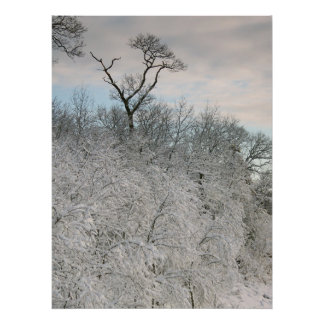 Snowy tree at Singing Beach Poster