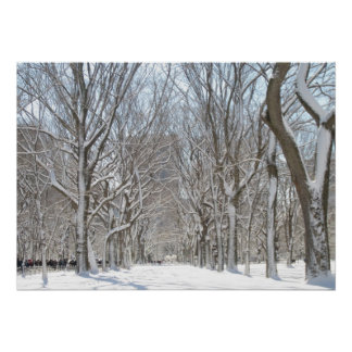 Snowy trees in Central Park Posters