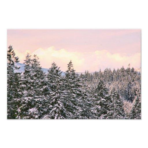 Snowy Trees Landscape Photo