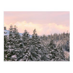 Snowy Trees Landscape Photo Postcard