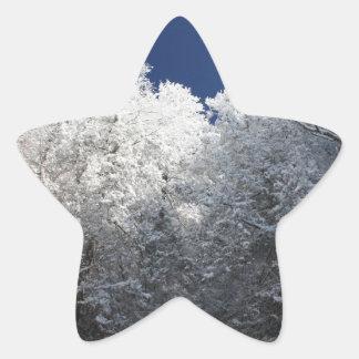 Snowy Trees Star Sticker