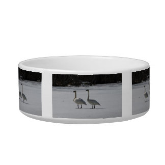 Snowy Trumpeter Swans Bowl