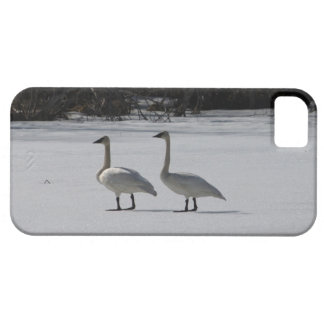Snowy Trumpeter Swans iPhone SE/5/5s Case