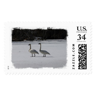 Snowy Trumpeter Swans Postage