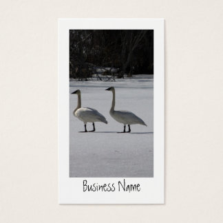 Snowy Trumpeter Swans; Promotional Business Card