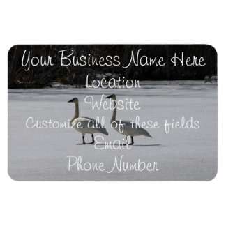 Snowy Trumpeter Swans; Promotional Magnet