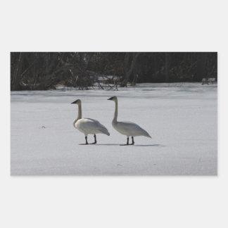 Snowy Trumpeter Swans Rectangular Sticker