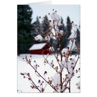 Snowy Weeds & Red Barn Card