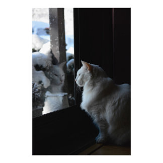 Snowy White Kitty Photo Print