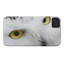 Snowy white owl owls photograph iPhone 4 Case-Mate case