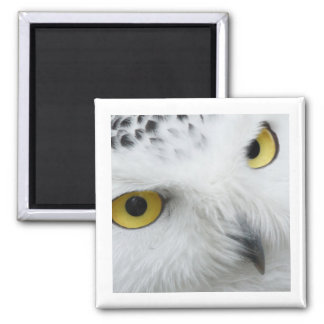 Snowy White Owl with Piercing Eyes 2 Inch Square Magnet