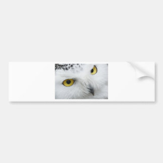 Snowy White Owl with Piercing Eyes Car Bumper Sticker
