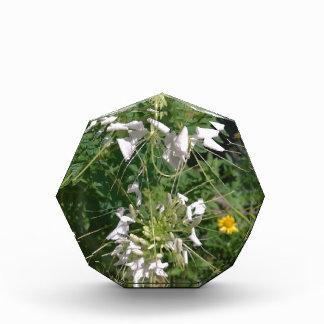 Snowy White Wild Flowers by JanLynn Acrylic Award