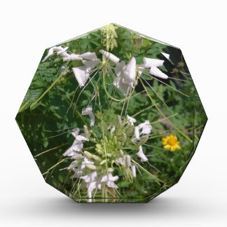 Snowy White Wild Flowers by JanLynn Award