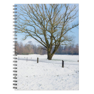 Snowy winter landscape with bare tree and blue sky notebook