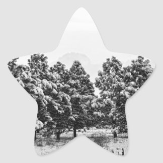 Snowy Winter Pine Trees In Black and White Star Sticker