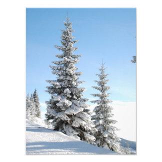Snowy Winter Scene with Christmas Trees Photo Art