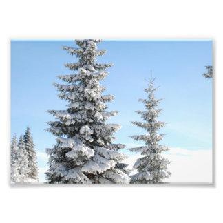 Snowy Winter Scene with Christmas Trees Art Photo