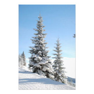 Snowy Winter Scene with Christmas Trees Photo
