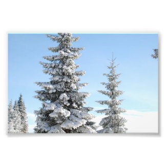 Snowy Winter Scene with Christmas Trees Photograph