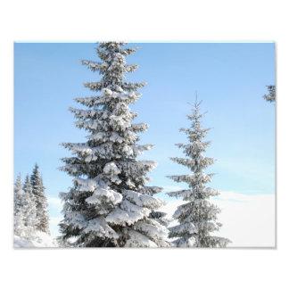 Snowy Winter Scene with Christmas Trees Photo Print