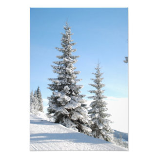 Snowy Winter Scene with Christmas Trees Photographic Print