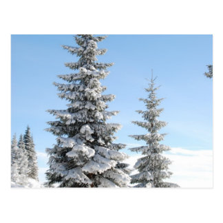 Snowy Winter Scene with Christmas Trees Postcard
