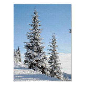 Snowy Winter Scene with Christmas Trees Poster