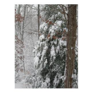 Snowy Winter Tree Scene Postcard
