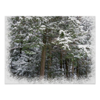 Snowy Xmas Trees in a Winter Wonderland Forest Posters