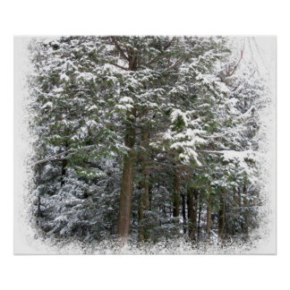 Snowy Xmas Trees in a Winter Wonderland Forest Poster