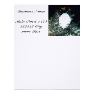 snrkeling blowfish (I) Letterhead
