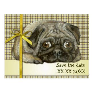 Snug pug postcard